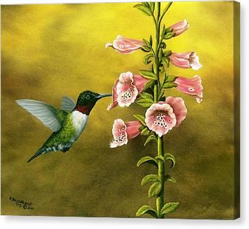 Ruby Throated Hummingbird And Foxglove Canvas Print by Rick Bainbridge