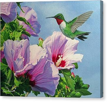 Ruby-throated Hummingbird Canvas Print by Ken Everett