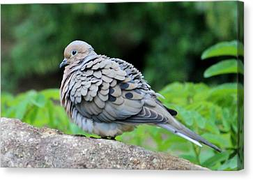 Ruffled Feathers Canvas Print by Cynthia Guinn