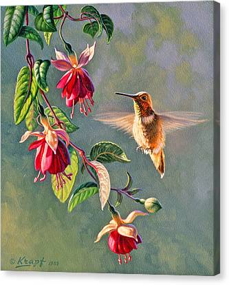 Rufous And Fuschia Canvas Print by Paul Krapf