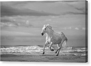 Run White Horses Viii Canvas Print by Tim Booth