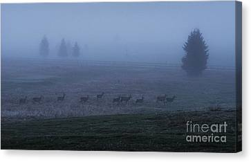 Running In The Mist Canvas Print by Yuri Santin