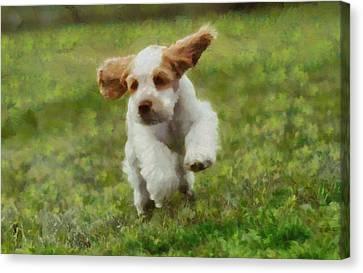 Running Puppy Cocker Spaniel Canvas Print by Dan Sproul