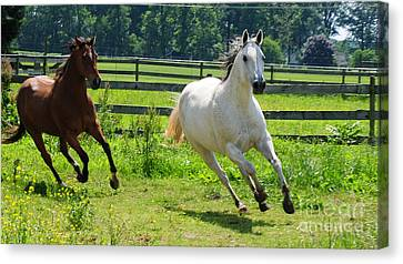 Running Wild Canvas Print by Paul Ward