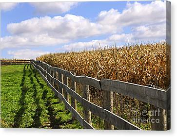 Rural Landscape With Fence Canvas Print by Elena Elisseeva