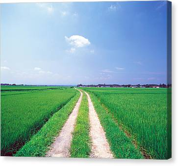 Rural Road Between Crop Fields Canvas Print by Panoramic Images