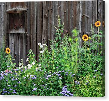 Rustic Barn Wood And Summer Flowers Canvas Print by Bill Wakeley