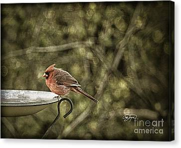 Rustic Cardinal Canvas Print by Cris Hayes