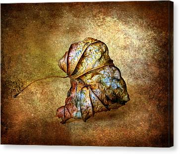 Rustic Canvas Print by Jessica Jenney