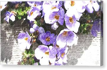 Rustic Planter Box Canvas Print by Beverly Guilliams