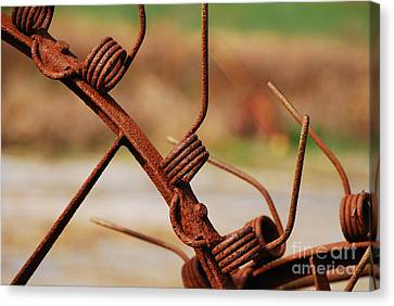 Rusty Tines Canvas Print by Mary Carol Story