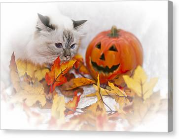 Sacred Cat Of Burma Halloween Canvas Print by Melanie Viola