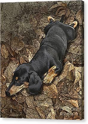 Sad Murphy Canvas Print by Judy Wood