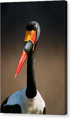 Saddle-billed Stork Portrait Canvas Print by Johan Swanepoel