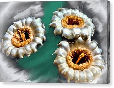 Saguaro Cactus Blossoms Canvas Print by Bob and Nadine Johnston