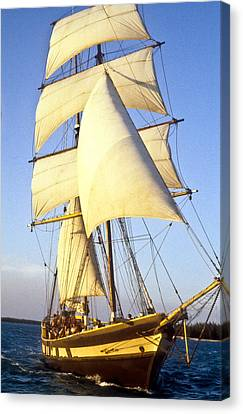 Sailing Ship Carribean Canvas Print by Douglas Barnett