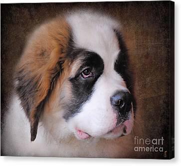 Saint Bernard Puppy Canvas Print by Jai Johnson