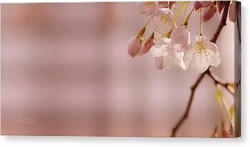 Sakura Canvas Print by Lisa Knechtel