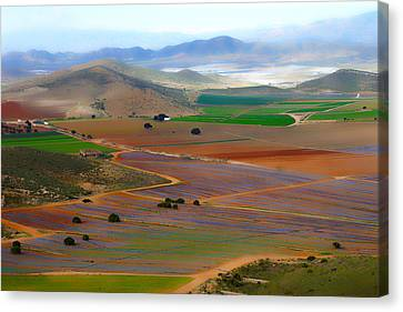 Salad Fields Canvas Print by Digby  Merry