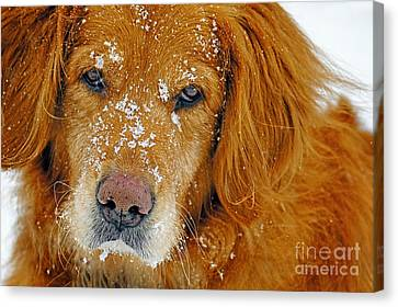 Pretty Red-head Canvas Print by ArtissiMo Photography