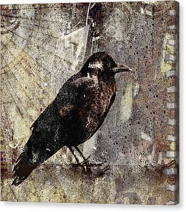 Same Crow Different Day Canvas Print by Carol Leigh