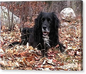 Sammi Smiling In Leaves Canvas Print by Randi Shenkman