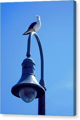 San Clemente Sea Gull  Canvas Print by Don Struke