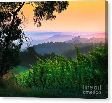 San Gimignano Hills Canvas Print by Inge Johnsson