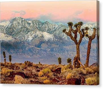 San Gorgonio Mountain From Joshua Tree National Park Canvas Print by Bob and Nadine Johnston