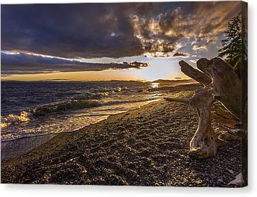 San Juans Majestic Driftwood Canvas Print by Mike Reid