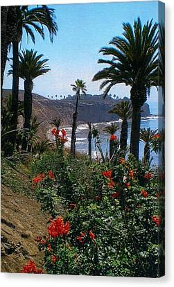 San Pedro Coast Line Canvas Print by Robert Bray