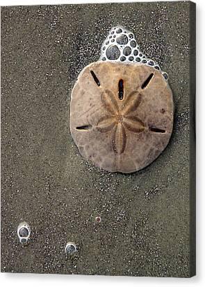 Sand Dollar Canvas Print by Tom Romeo