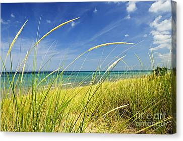 Sand Dunes At Beach Canvas Print by Elena Elisseeva