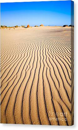 Sand Dunes At Eucla Canvas Print by Colin and Linda McKie