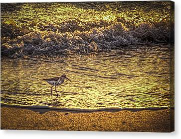 Sand Piper Canvas Print by Marvin Spates