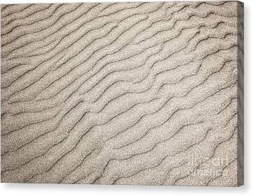 Sand Ripples Natural Abstract Canvas Print by Elena Elisseeva