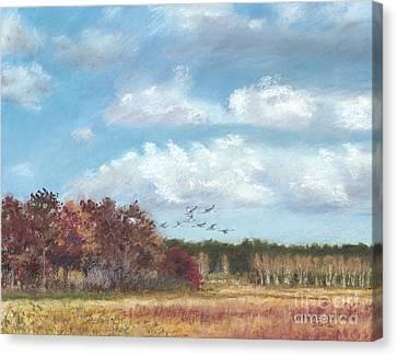 Sandhill Cranes At Crex With Birch  Canvas Print by Jymme Golden
