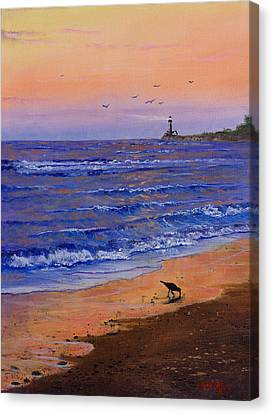 Sandpiper At Sunset Canvas Print by C Steele