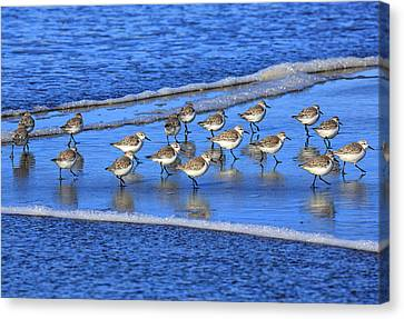 Sandpiper Symmetry Canvas Print by Robert Bynum