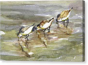 Sandpiper Trio Canvas Print by Julianne Felton