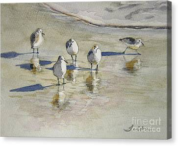 Sandpipers 2 Watercolor 5-13-12 Julianne Felton Canvas Print by Julianne Felton