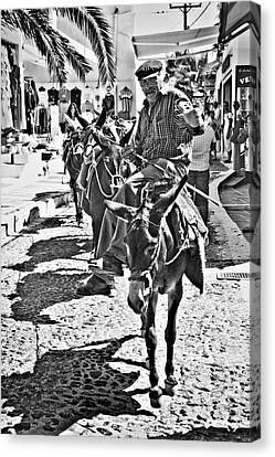 Santorini Donkey Train. Canvas Print by Meirion Matthias