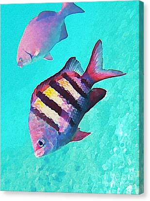 Sargeant Fish Canvas Print by John Malone