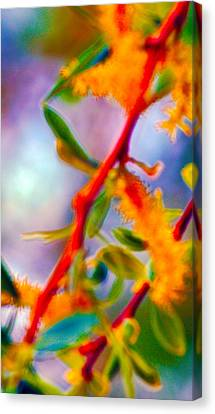 Saturated  Canvas Print by Brent Dolliver