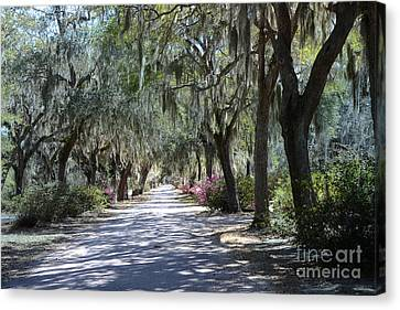 Savannah Georgia Gothic Cemetery Bonaventure Spanish Moss Trees - Hanging Spanish Moss Trees Canvas Print by Kathy Fornal