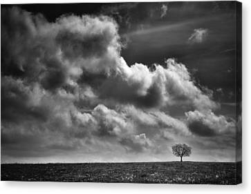Scared Lone Tree Canvas Print by Dominique Dubied