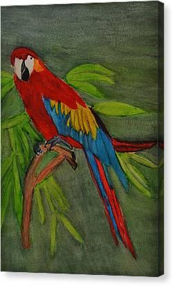 Scarlet Mccaw Canvas Print by Linda Brown