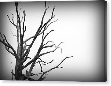 Scary Tree Iv Canvas Print by Kelly Hazel