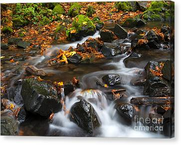 Scattered Seasons Canvas Print by Mike Dawson