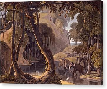 Scene In Sitsikamma - Elephants Canvas Print by Samuel Daniell